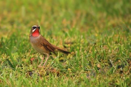 怎么选择观赏鸟